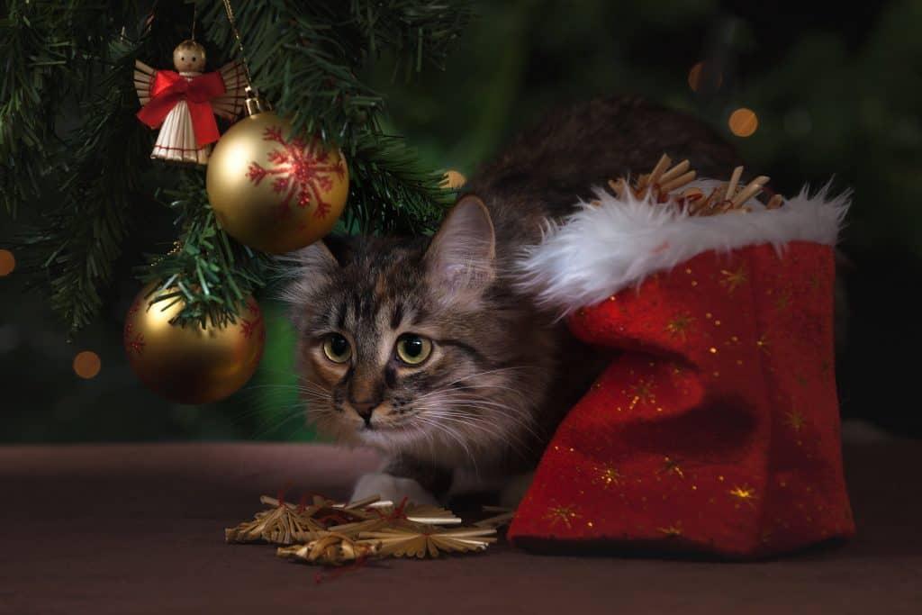 świąteczne piosenki musicalowe