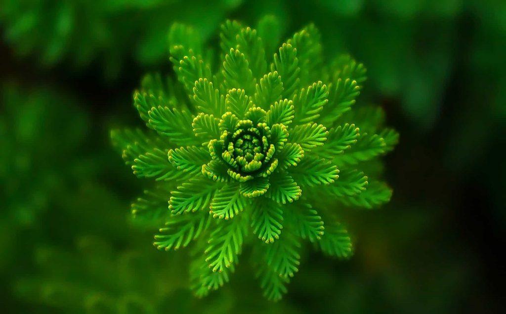 zielony spektakl